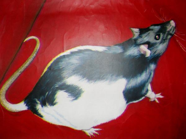 jim-heighway-pet-portraits (4)
